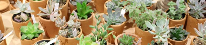 春/秋型の多肉植物の育て方