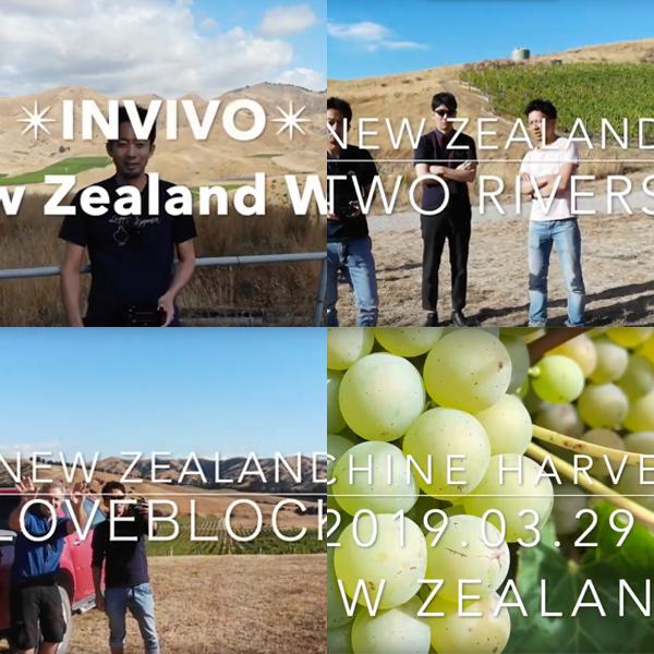 【NZ視察/2019年3月】NZヴィンヤード上空のドローン映像集