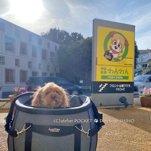 『伊豆高原わんわんパラダイスホテル』犬の石けん納品♪
