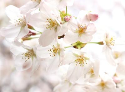 ・・・ 春のお得なキャンペーンのお知らせ ・・・