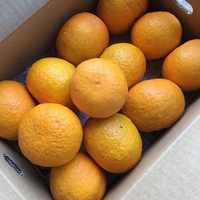 4月18日:『小田原産 低農薬 甘夏』オンライン販売スタートします!