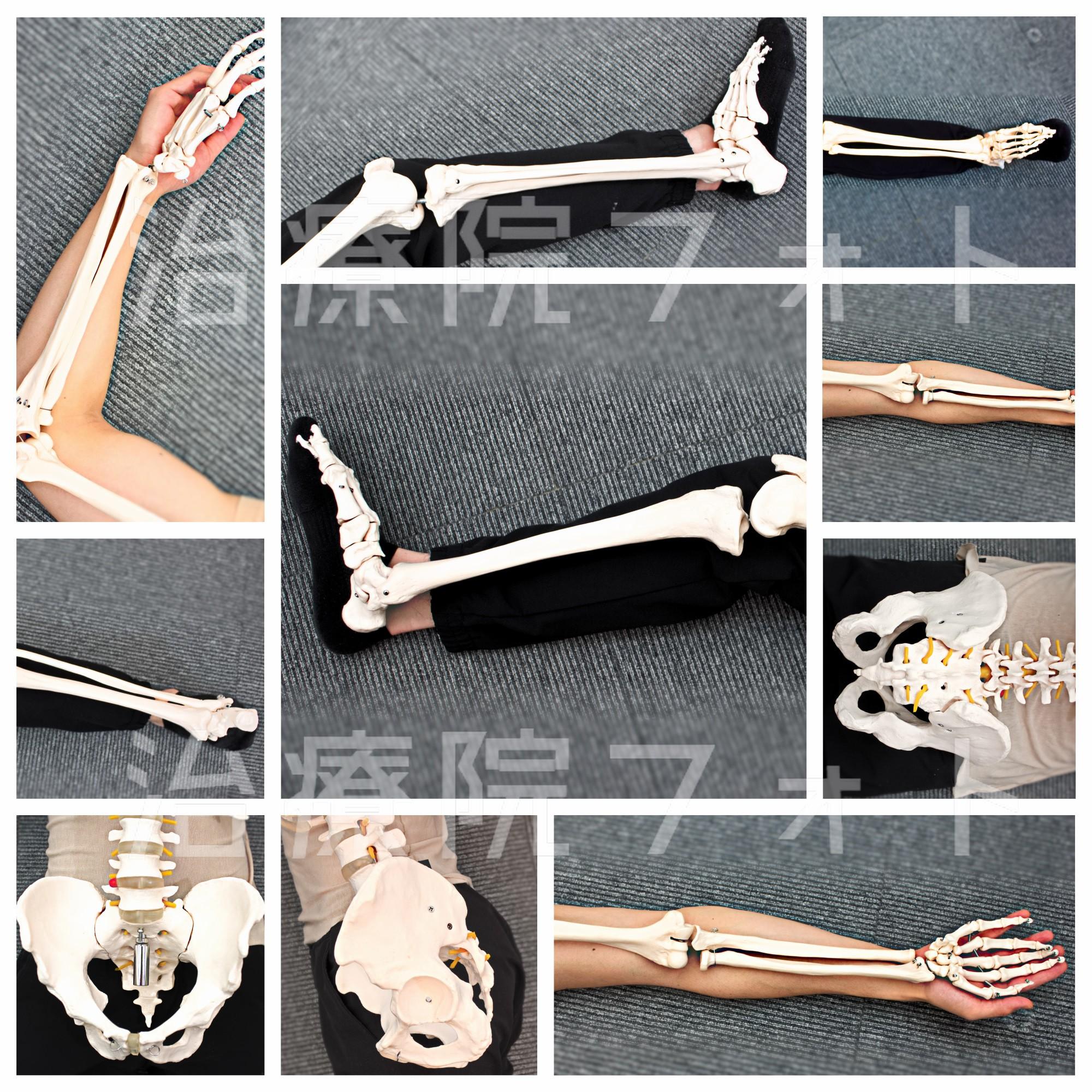 骨格かさね画【四肢&骨盤】全12ショット。
