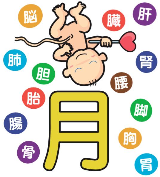 「育」という漢字。月の上の部分は赤ちゃんがお腹の中で逆さまになっている様子を表現しています。