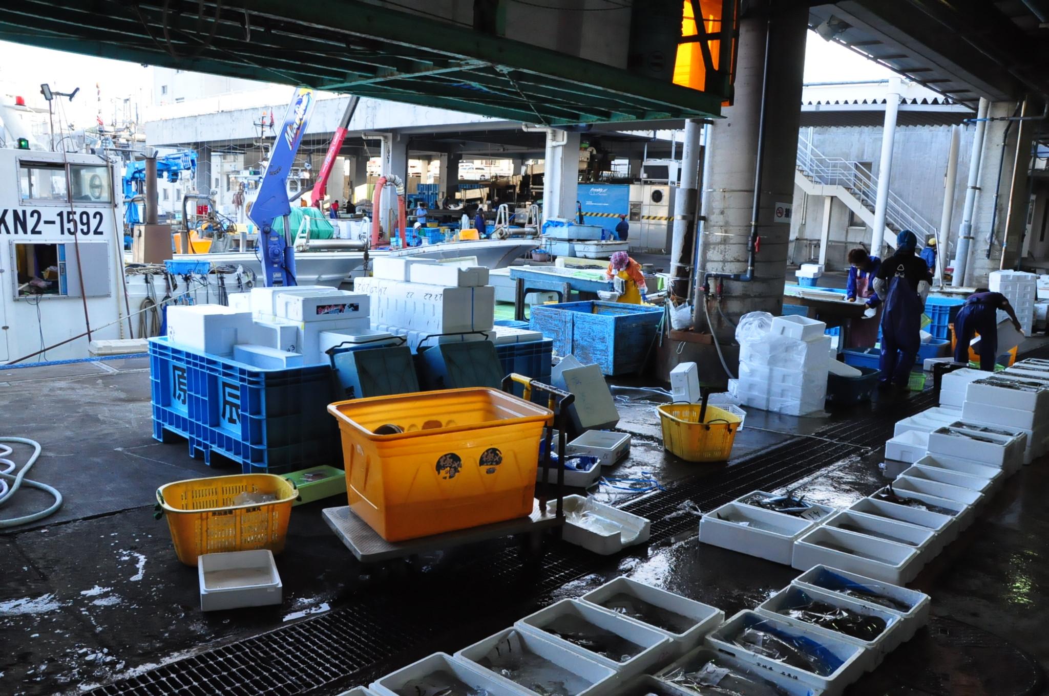小田原漁港へ水揚げされた旬の地魚を仕入れに...