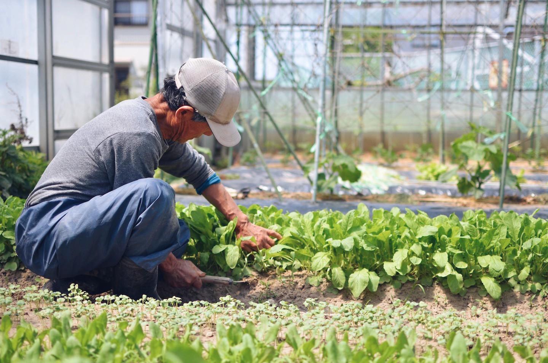 無農薬野菜を使用