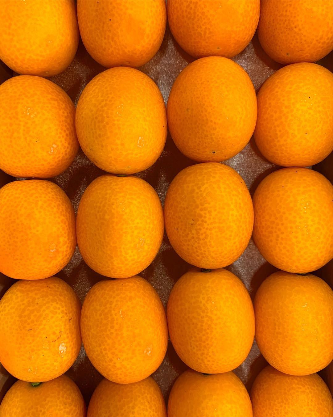 高知県の冬から春にかけて柑橘類が楽しめます。