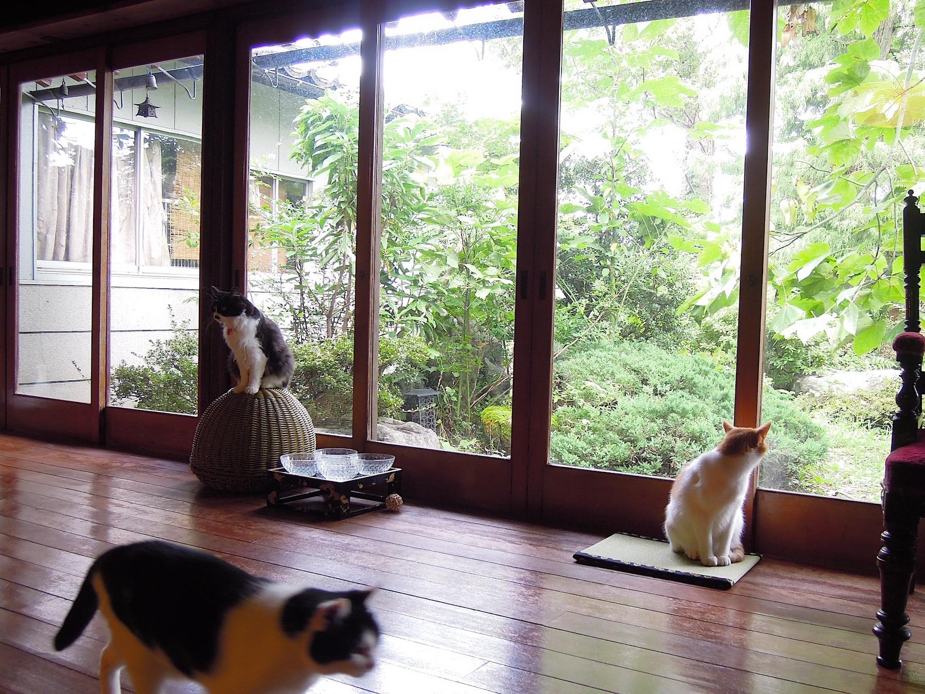 撮影モデル猫 〜月猫カフェについて〜