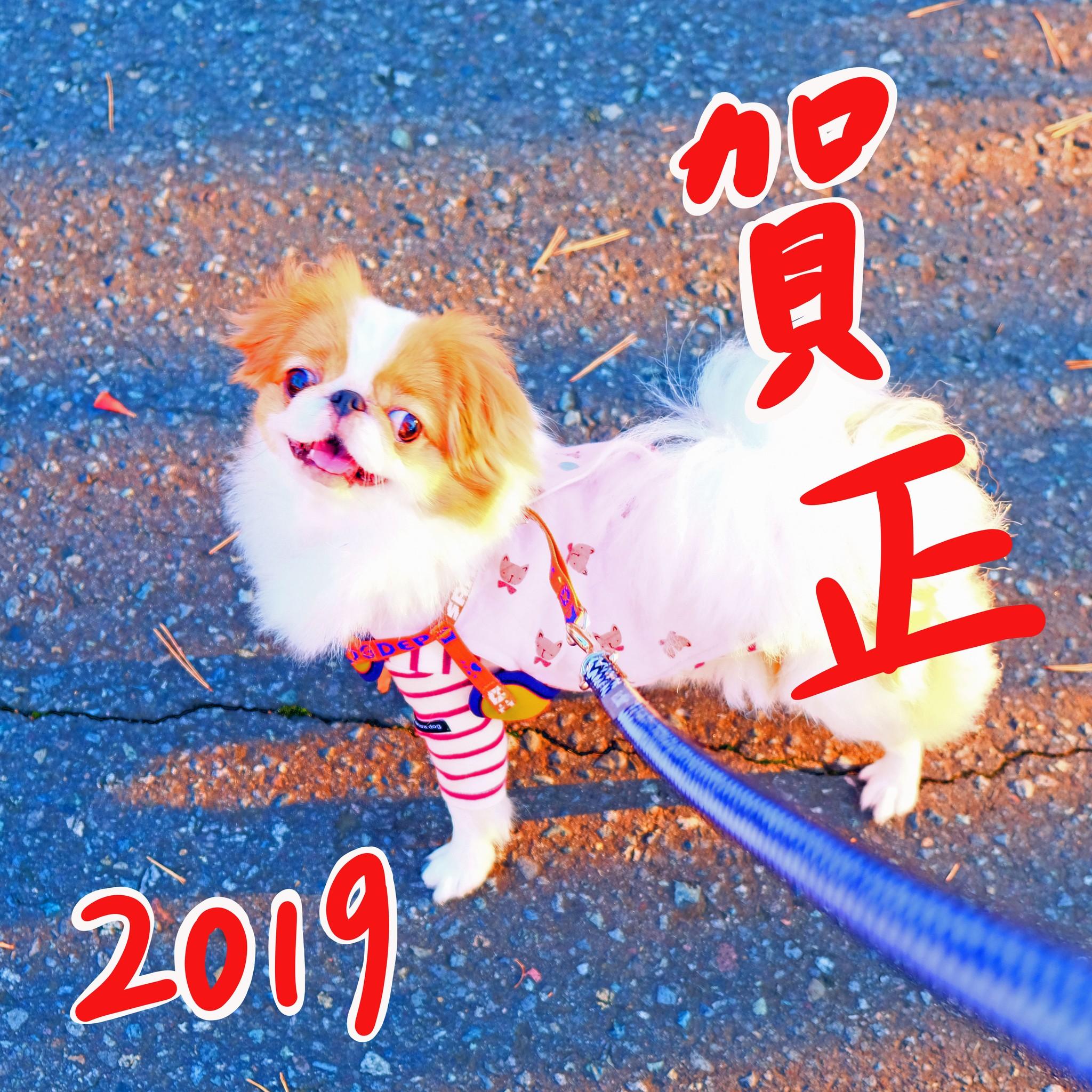 2019年あけましておめでとうございます♪