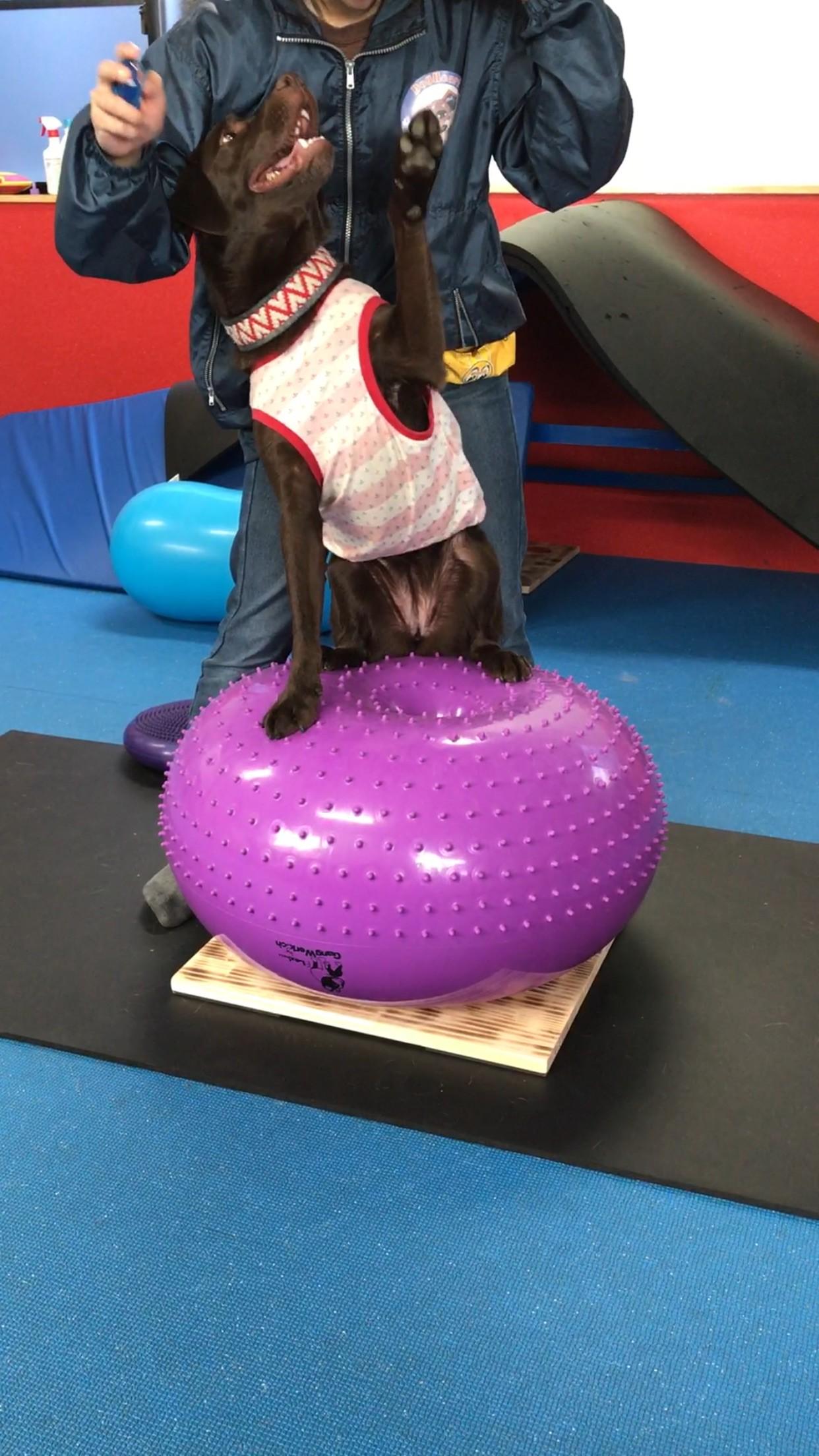 動物にも体幹トレーニングは重要?
