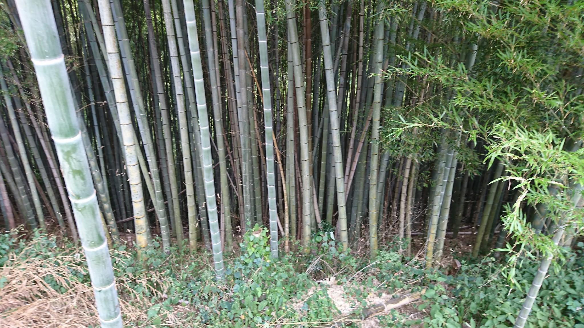 竹資源は磨けば宝石よりも輝く宝の山