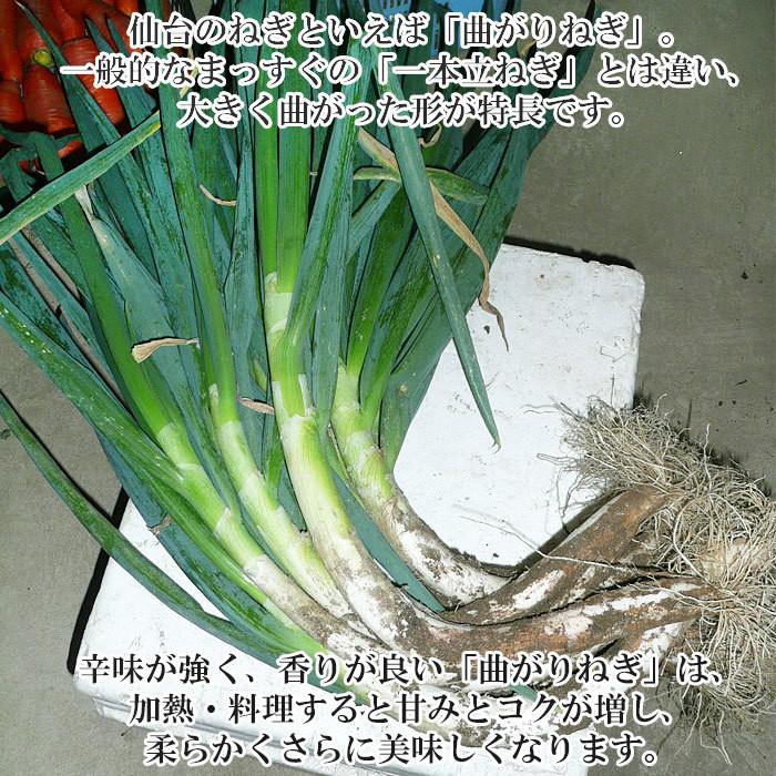 【みやぎ伝統野菜】仙台曲がりねぎ