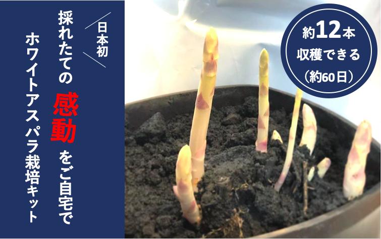 ホワイトアスパラ栽培キット予約受付開始しました!