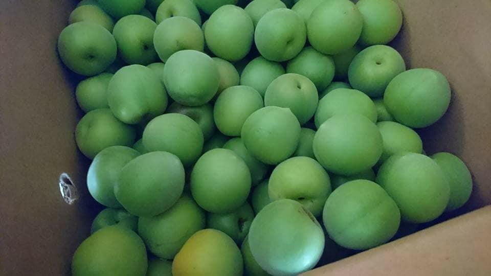 梅農家の常備薬『梅エキス』