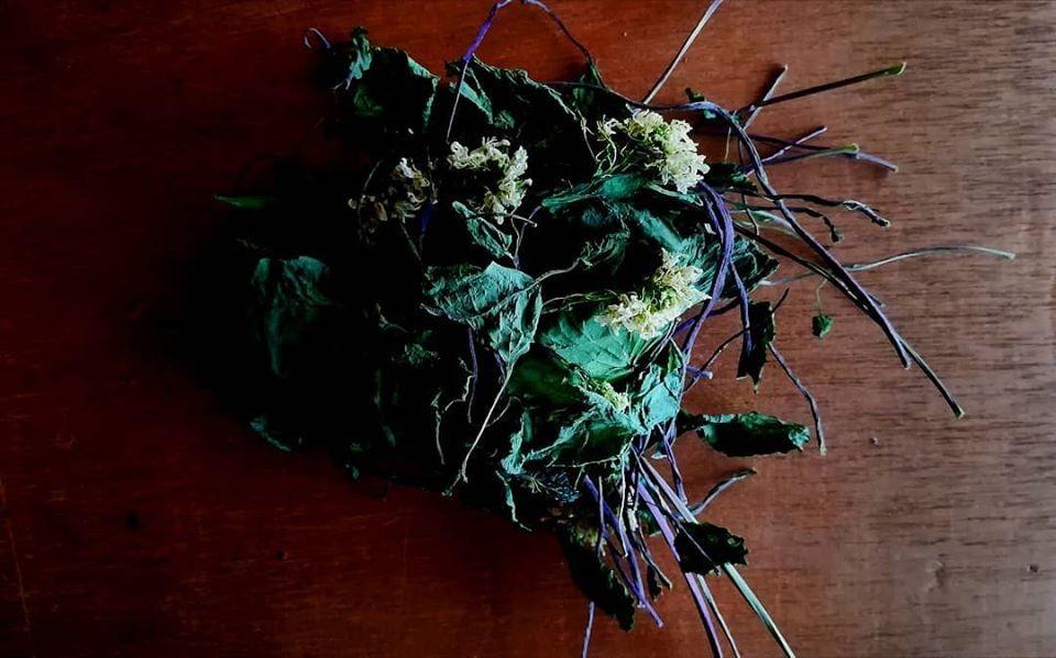 山葵の出汁