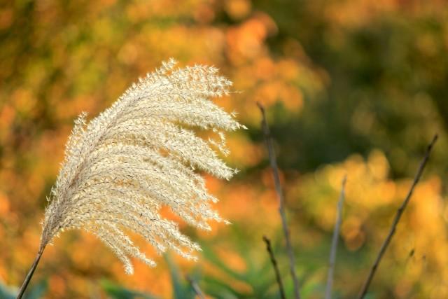 【ブログ】福島県桑折町の秋 紅葉と旬の味覚