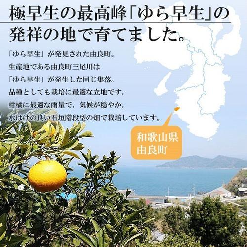 【和歌山県産】ゆらみかん 【送料無料】