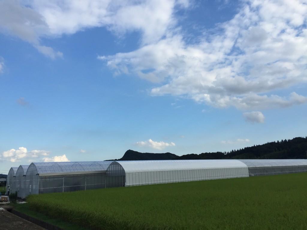 【ミニトマトこくパリッ】JGAP認証農場 /   安全・安心の農産物を徹底しています。