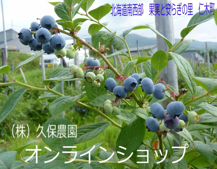 ブルーベリー・北海道・産地直送