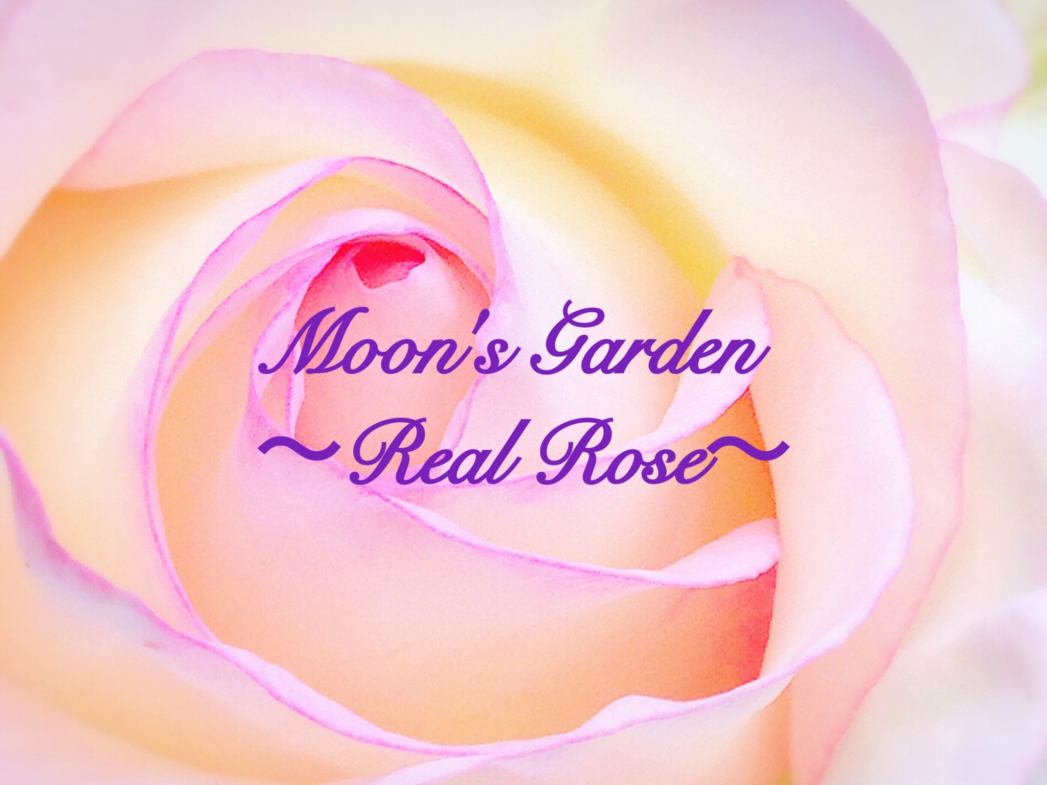 Moon's Garden 〜Real Rose〜
