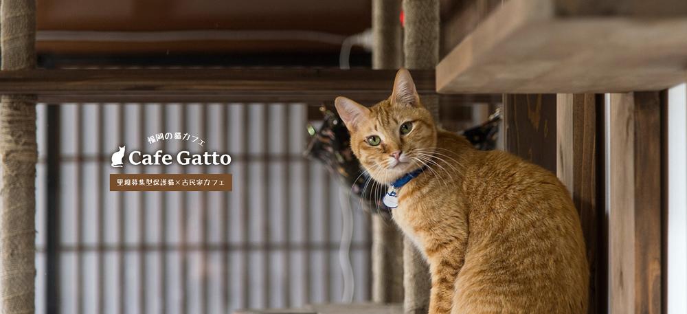福岡の里親募集型保護猫×古民家カフェ cafegatto