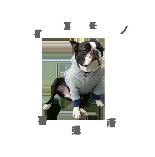 イヌ モノ 研究所