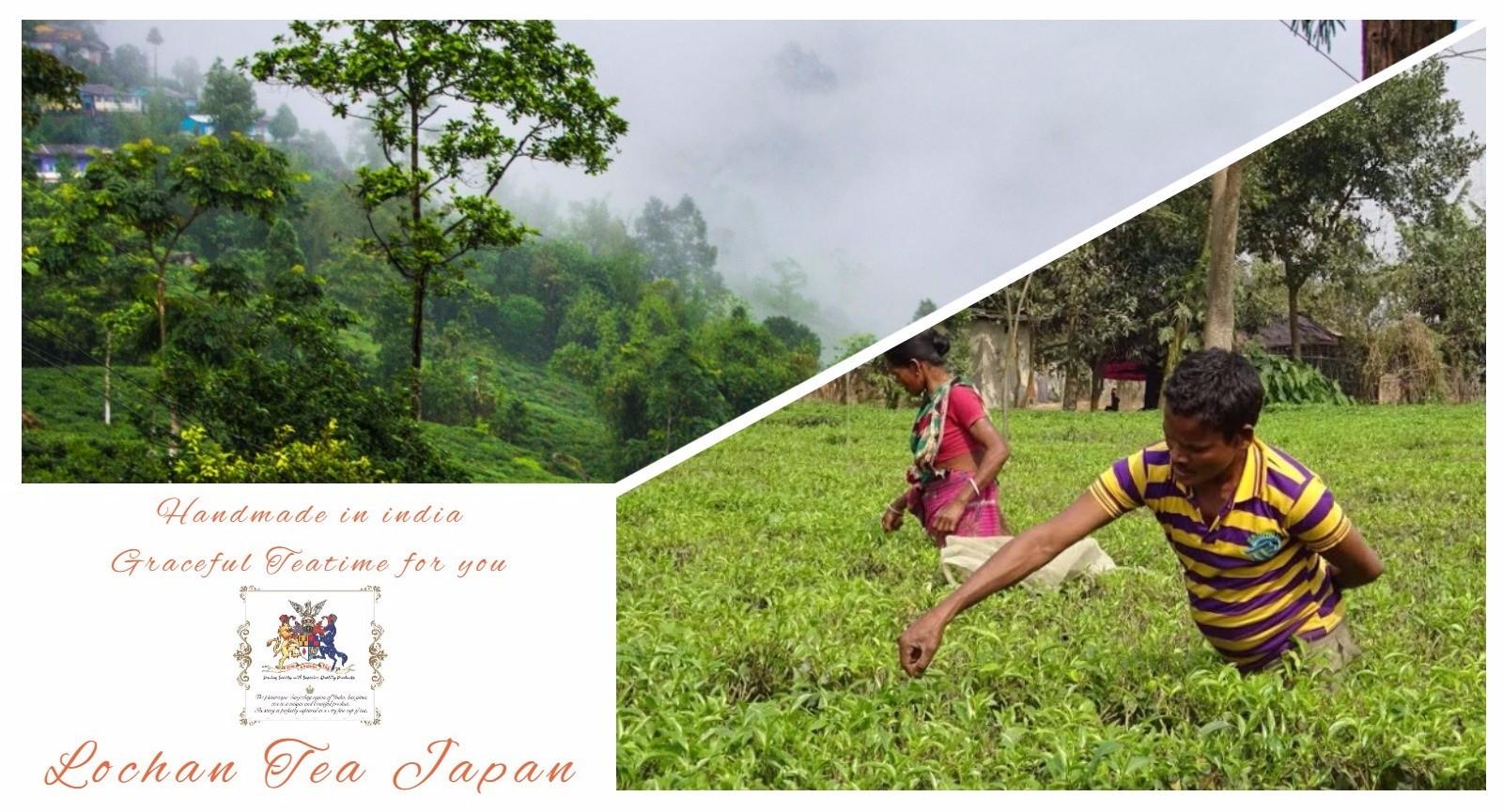 Tea Garden by Lochantea Japan |ロチャンティー・ジャパン公式