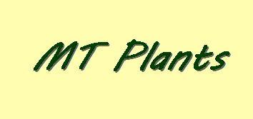 MTPlants