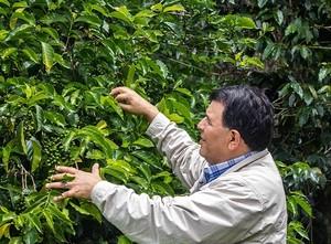 【パナマ・ベルリナ農園ベイビーゲイシャ】コーヒー豆 50g