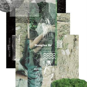"""【ラスト1/7""""】Campanella - Douglas fir"""