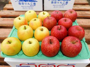 【家庭用】りんご 1段(サンフジ・王林詰合せ)