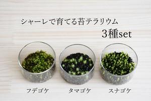 【苔テラリウム】小さなコケの森ミニシャーレ 3種set