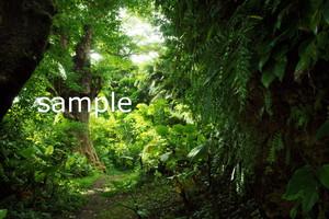内金城嶽と大アカギ構図6【写真データDSC09202S】