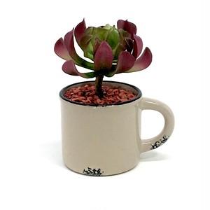 eco plant 022 フェイクグリーン (サボテン) / 陶器製花器
