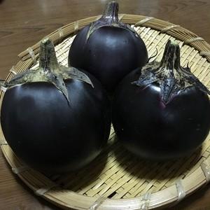 賀茂大芹川丸茄子/ Kamo Nasu (Eggplant)
