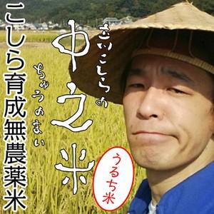 ※うるち米1kg こしら育成無農薬米 立川こしらの中之米(ちゅうのまい)