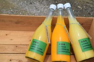 【3本 酸味を楽しむ】柑橘ジュースセット(伊予柑・黄金柑・河内晩柑)