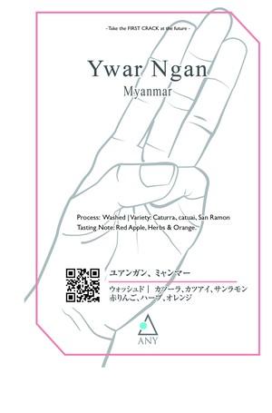 [100g]  Ywar Ngan, Myanmar - Washed / ユアンガン、ミャンマー - ウォッシュド