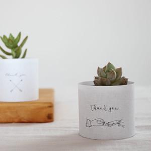[40set]多肉植物 プチギフトセット(wedding ホワイトデザイン)