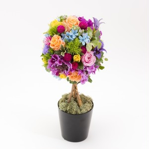 seasonal topiary Arrangement(mix)