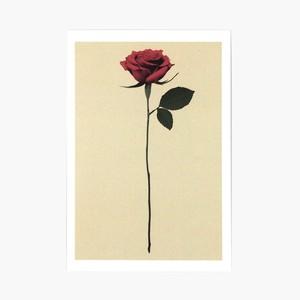 ポストカード5枚組/RED ROSE