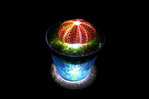 Healing lamp ウニ殻 ver.2