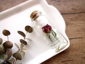 植物標本 Botanical Collection■No.R-24 バラ サマーパーティー