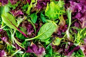 【人気の彩りサラダ】品種Mix ベビーリーフ - mesclun greens-