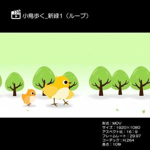 小鳥歩く_新緑1(ループ)