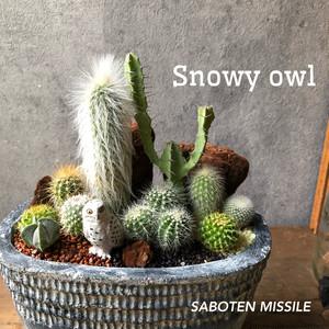Bubo scandiacus シロフクロウ  Oval bowl