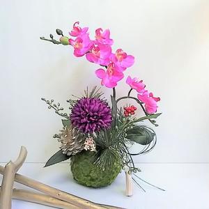 新春 こけ玉 アレンジ  ピンクコチョウラン アーティフィシャルフラワー