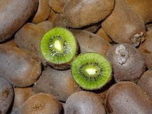 ご家庭用(訳あり)香緑キウイフルーツ9.5キロ