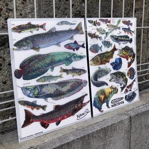 【クリアファイル】淡水魚たち【A4サイズ】