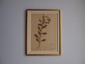 Botanica Art