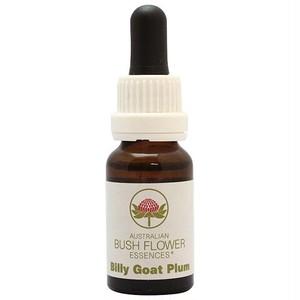ビリーゴウトプラム[Billy Goat Plum]